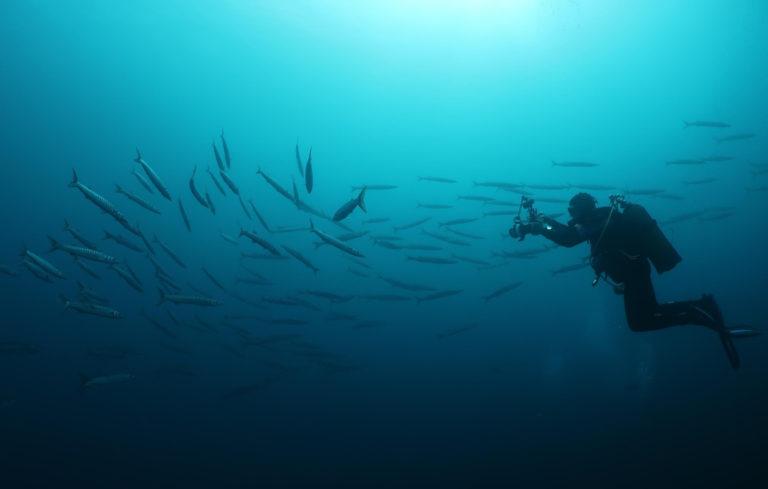 Centre de plongée 06230 plongee sous marine cote azur 06
