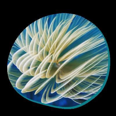 Centre de plongée 06230 decouvrir flore 06